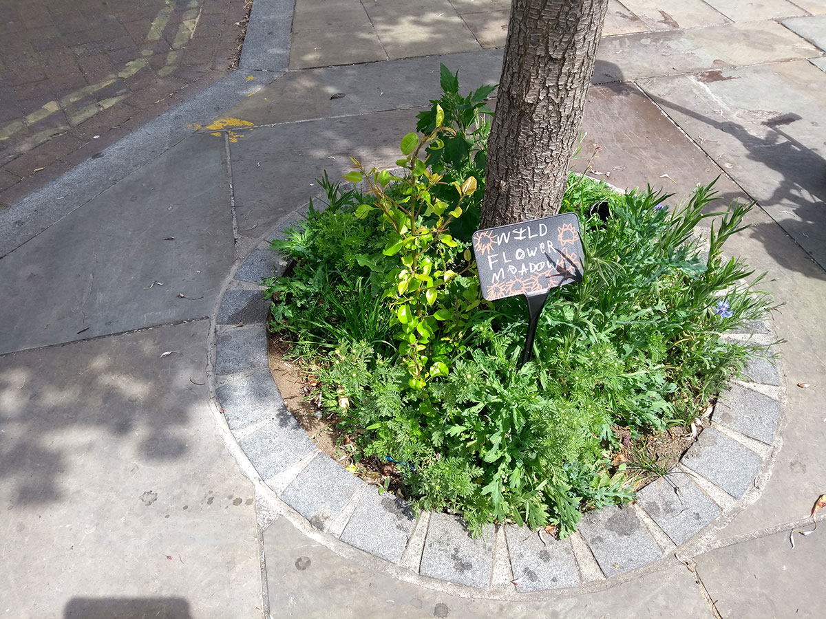 A mini wildflower meadow in a tree pit in Herne Hill Station Square